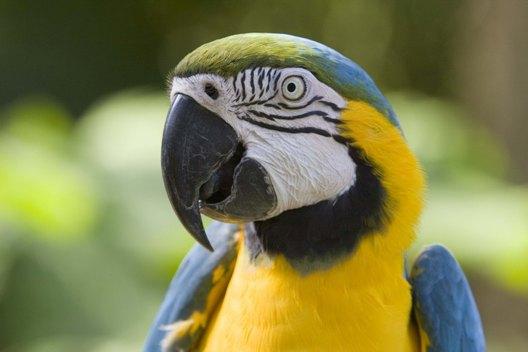 parrot_heada