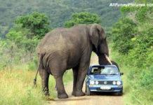 elephanttrouble