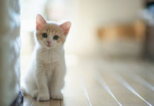 lovely-baby-cat-wallpaper
