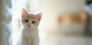 lovely-baby-cat-wallpaper