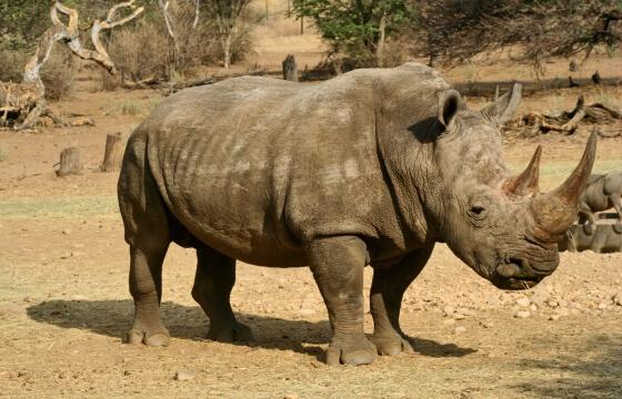 africki-nosorog