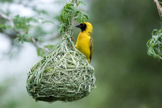 ptica-tkac