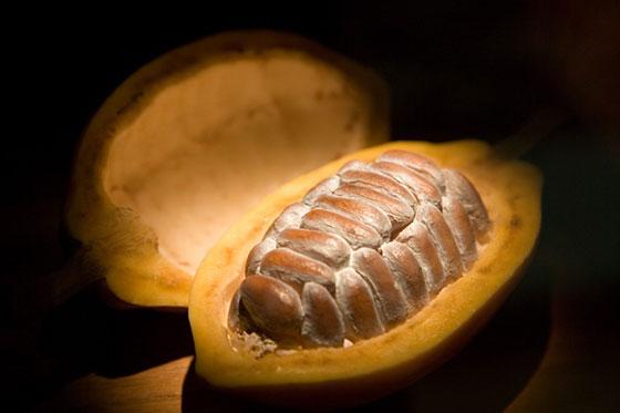 kakao plod