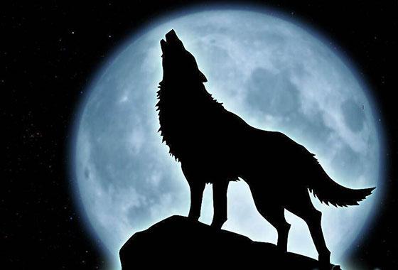 vuk pastir