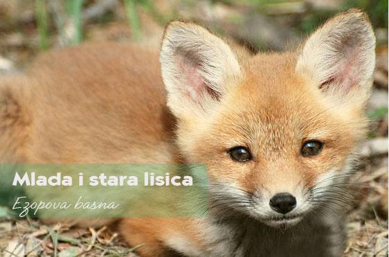 lisica basna