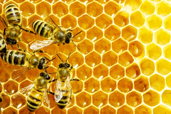 2014 11 19 bees