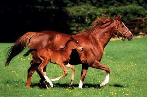 konj i zdrebe