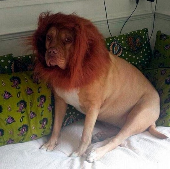 lion dog2