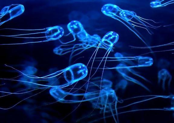 box meduza