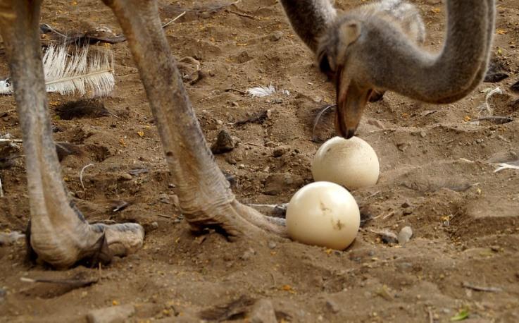 Zanimljivosti o jajetu