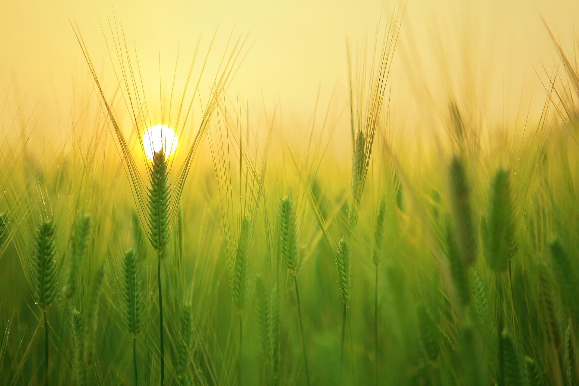 izlazak-sunca-jutro