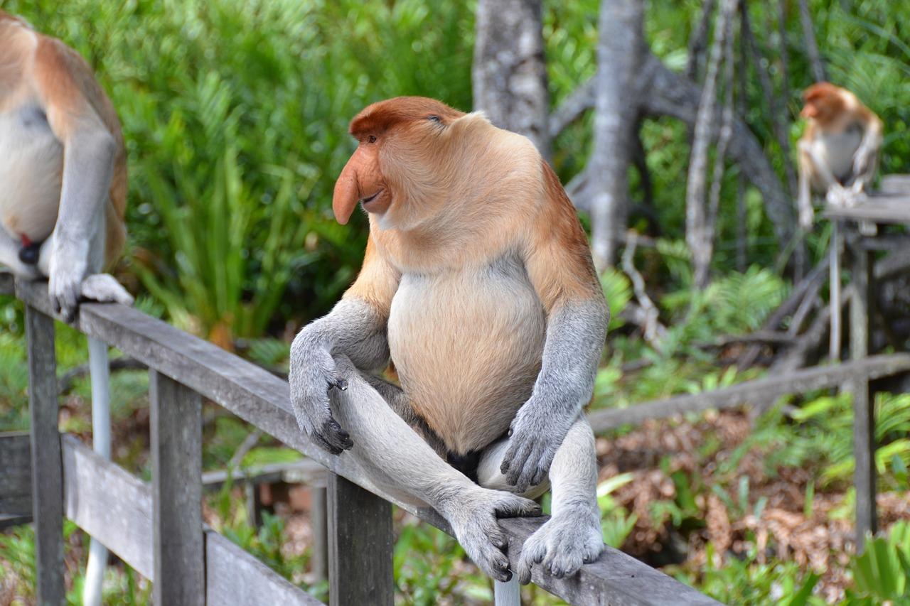 Majmun nosonja