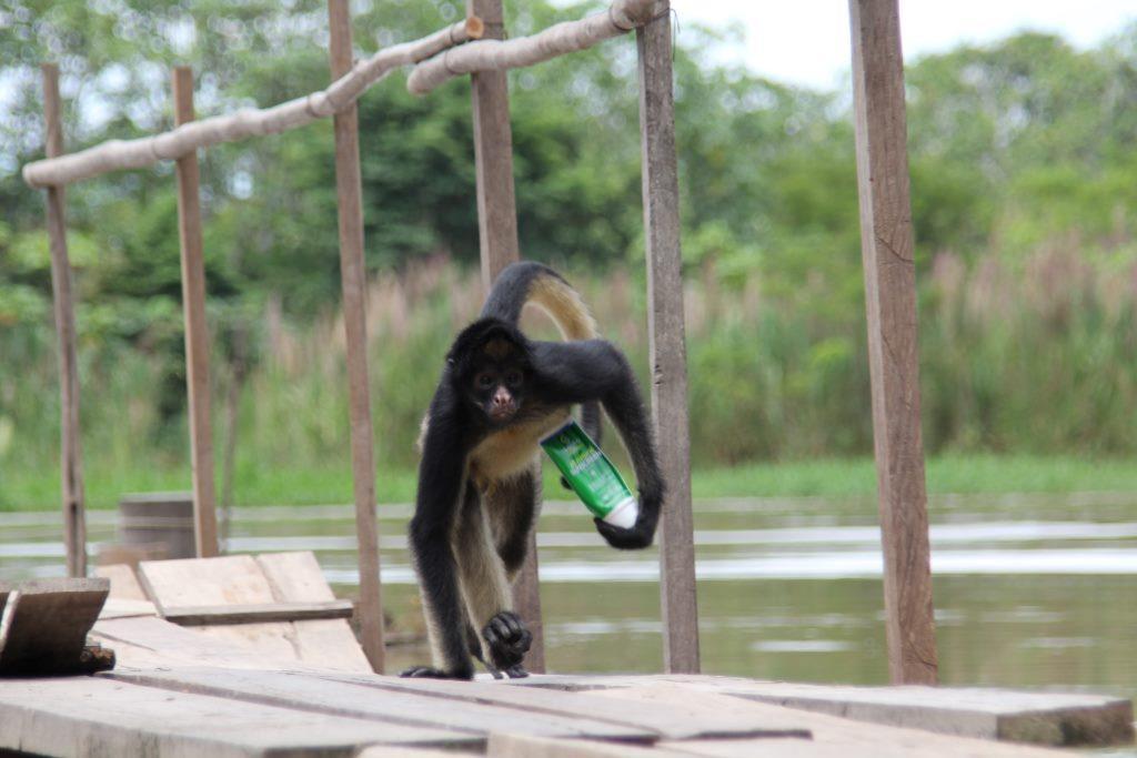 Pauk majmun