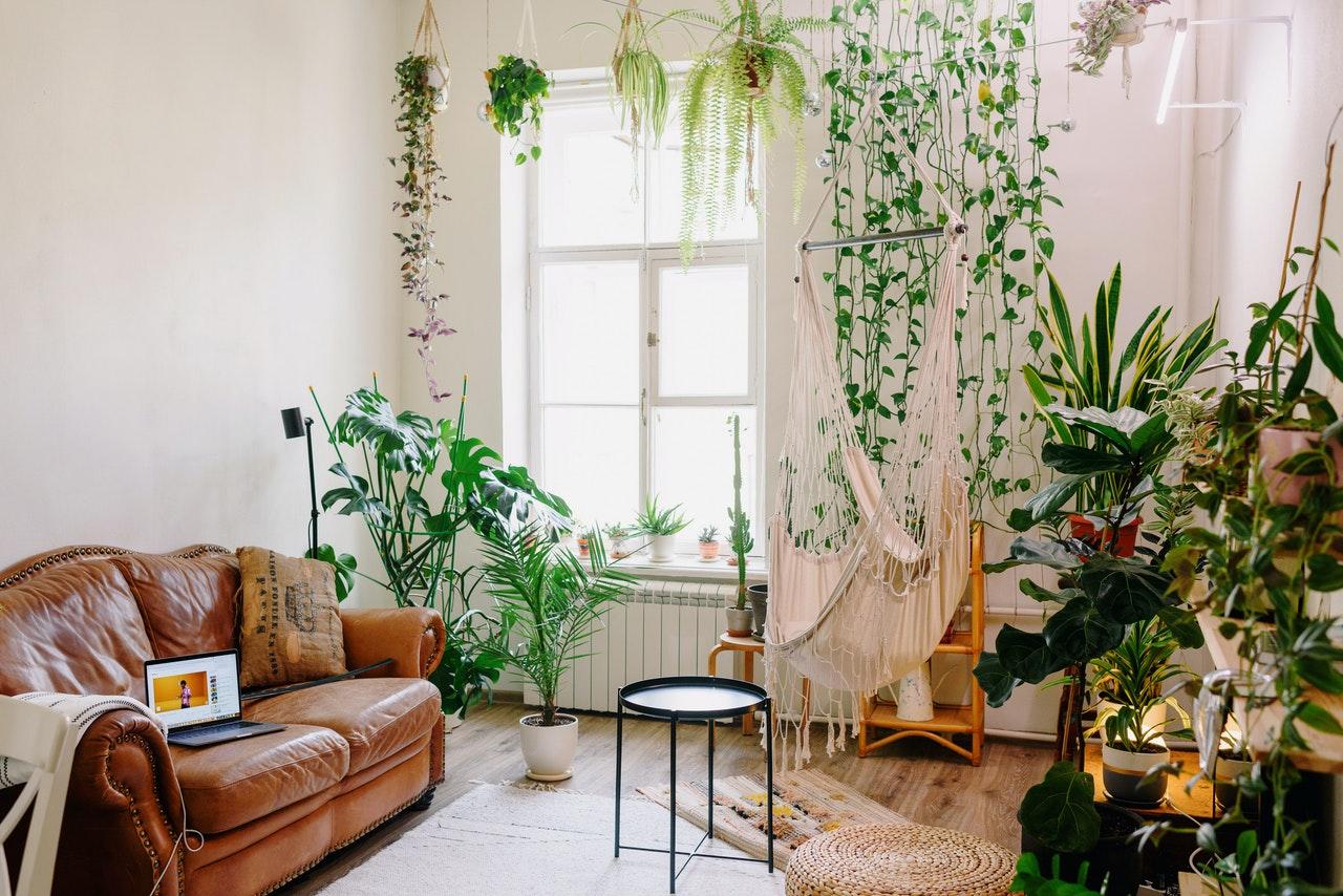 ukrašavanje dnevne sobe biljkama