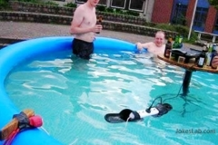 funny-party-in-the-pool-only-seen-in-australia